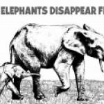 Bronx Zoo & Wildlife Conservation Society Elephants