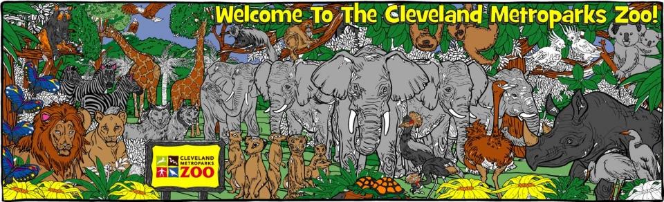 African Elephants - 1434